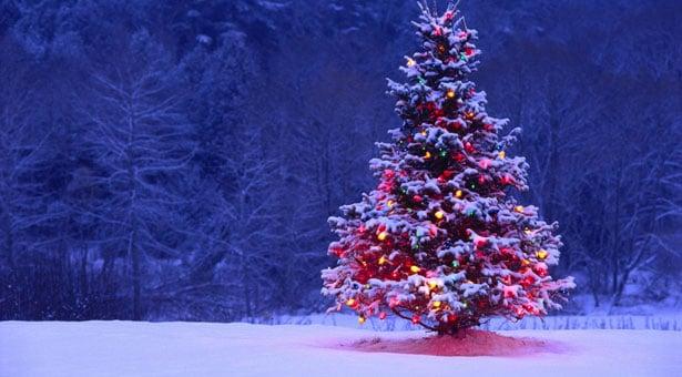 Στόλιζαν Χριστουγεννιάτικο δέντρο στον Πόντο;