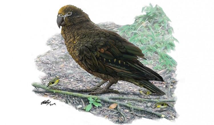 Βρέθηκε απολίθωμα του μεγαλύτερου παπαγάλου που υπήρξε ποτέ στη Γη