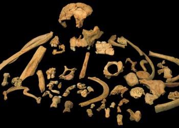 Το αρχαιότερο ανθρώπινο γενετικό υλικό βρέθηκε στα δόντια ενός κανίβαλου Homo antecessor