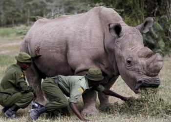 Ο Σουδάν, σύμβολο της ανάγκης διατήρησης των ειδών στη φύση (φωτ.: ert.gr)