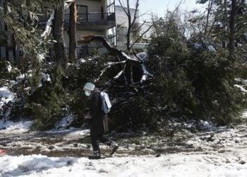 Γυναίκα περνά μπροστά από πεσμένο δέντρο στην περιοχή της Κηφισιάς (φωτ.: ΑΠΕ-ΜΠΕ/ Γιάννης Κολεσίδης)