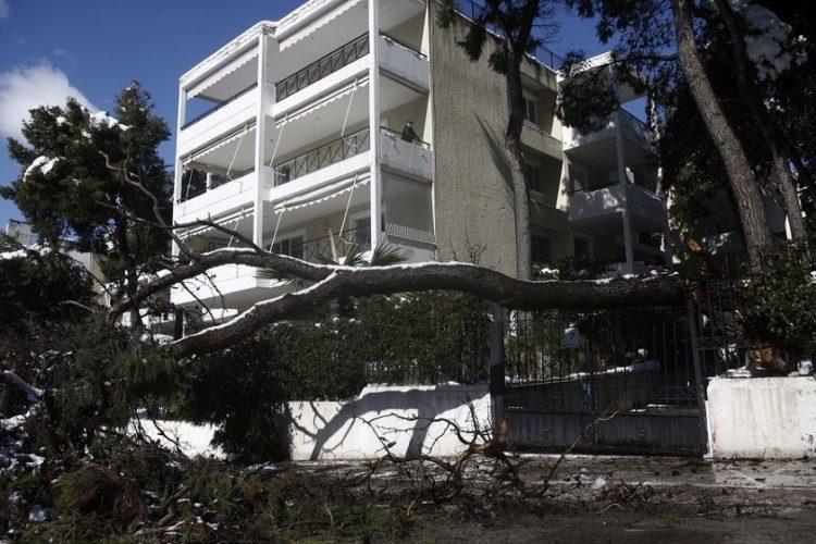 Ένας άνδρας στέκεται στο μπαλκόνι του κοιτάζοντας το πεσμένο δέντρο που άφησε πίσω της η «Μήδεια» στην Κηφισιά (φωτ.: ΑΠΕ-ΜΠΕ / Γιάννης Κολεσίδης)