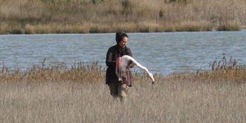 (Φωτ.: ΑΠΕ-ΜΠΕ/  Σταύρος Καλπάκης / Σωματείο «Δράση για την άγρια ζωή»)