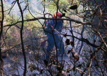 Πυροσβέστης επιχειρεί στην κατάσβεση της πυρκαγιάς στην περιοχή των Γερανείων, κοντά στον Σχίνο Λουτρακίου (φωτ.: ΑΠΕ-ΜΠΕ /Βασίλης Ψωμάς)