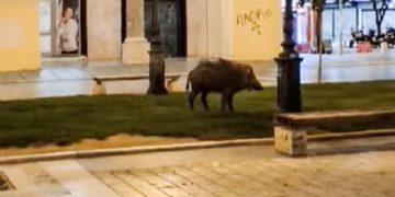 στυνομικός από το Α.Τ. Λευκού Πύργου κατέγραψε με το κινητό τηλέφωνο το ζώο να περιπλανάται στο κέντρο της πόλης