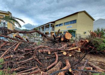 Ξεριζωμένα δέντρα έξω από το Γυμνάσιο Καλλονής, μετά  από τα έντονα καιρικά φαινόμενα που σημειώνονται από τις 6 το πρωί, στη δυτική Λέσβο (Φωτ.: ΑΠΕ-ΜΠΕ/ Βαγγέλης Παπαντώνης)