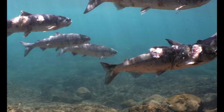 (Φωτ.: Columbia Riverkeeper/ YouTube)