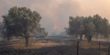 Εικόνα από την περιοχή Καλαμώνα στη Ρόδο (φωτ.:ΑΠΕ-ΜΠΕ /Λευτέρης Δαμιανίδης)