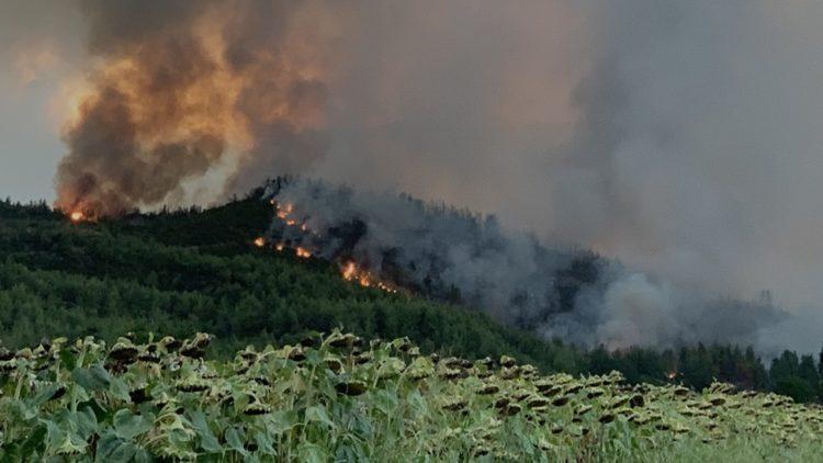 Εικόνα από φωτιά σε δασική έκταση στο χωριό Ζωοδόχος Πηγή, στην Εύβοια (φωτ. αρχείου: ΑΠΕ-ΜΠΕ /Παναγιώτης Κούρος)