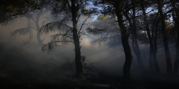 Πυκνός καπνός ανάμεσα σε καμμένα δέντρα κατά τη διάρκεια της πυρκαγιάς στην περιοχή των Θρακομακεδόνων, Σάββατο 07 Αυγούστου 2021 (φωτ.: ΑΠΕ-ΜΠΕ/ Αλέξανδρος Μπελτές)