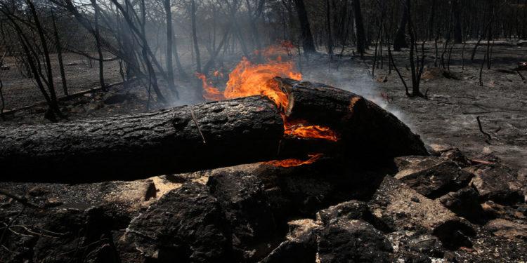 Φωτιά καίει πεσμένο κορμό δέντρου στην περιοχή των Θρακομακεδόνων, Πάρνηθα, Κυριακή 8 Αυγούστου 2021 (φωτ.: ΑΠΕ-ΜΠΕ/ Ορέστης Παναγιώτου)