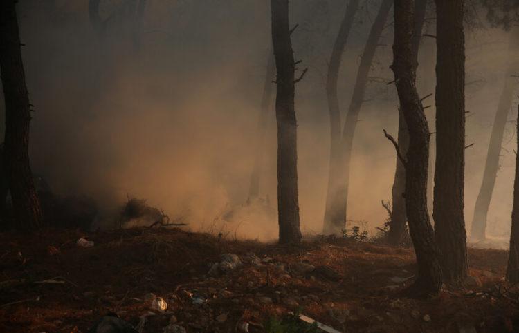 Πυκνός καπνός ανάμεσα σε δέντρα κατά τη διάρκεια της πυρκαγιάς στην περιοχή των Θρακομακεδόνων, Σάββατο 07 Αυγούστου 2021 (φωτ.: ΑΠΕ-ΜΠΕ/ Αλέξανδρος Μπελτές)
