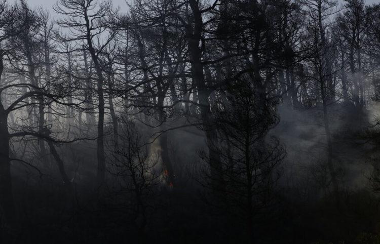 Καμένα δέντρα από την πυρκαγιά που ξέσπασε στην περιοχή Κάζα στα Βίλια Αττικής, τη Δευτέρα 23 Αυγούστου 2021 (φωτ.: ΑΠΕ-ΜΠΕ/ Γιάννης Κολεσίδης)