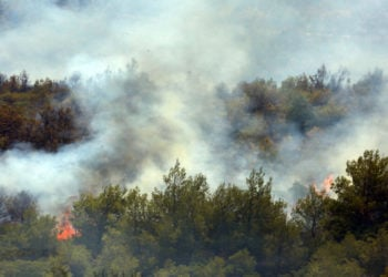 Φωτιά καίει πεύκα,  στο όρος Πατέρας, στην επαρχιακή οδό Οινόης-Πόρτο Γερμενού στη  Μάνδρα, καθώς η φωτιά καίει σε δυσπρόσιτα σημεία, Τρίτη 17 Αυγούστου 2021 (φωτ.: ΑΠΕ-ΜΠΕ/ Αλέξανδρος Μπελτές)