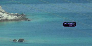 (Φωτ.: Mikonos Live TV)